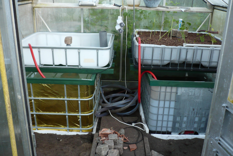 Aquaponics Bauanleitung Archive - Fische unter dem Gemüse